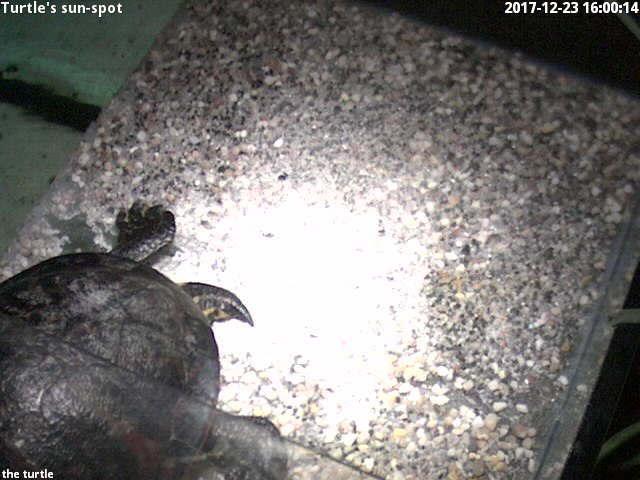 time-lapse frame, turtle's sun-spot webcam