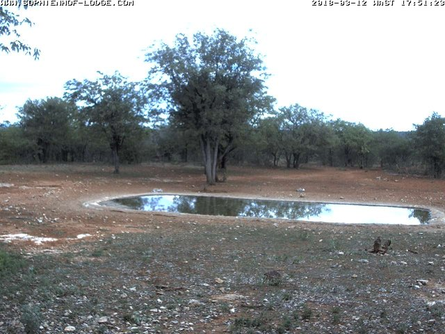 time-lapse frame, Waterhole packed with Game webcam
